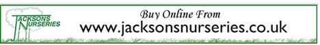 Buy online from Jacksons Nurseries